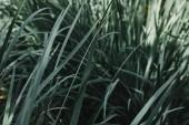 zblízka tenké zelené listí v zahradě