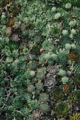Photo elevated view of small green beautiful potted succulents