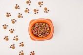 erhöhten Blick auf die Pfoten gemacht Hundefutter und Plastikschüssel mit Tiernahrung auf weiße Fläche