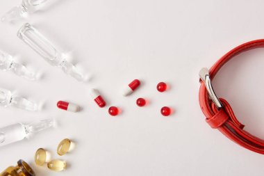 elevated view of arranged various pills, ampoules with medical liquid and dog collar on white surface