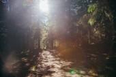 krásné horské dráhy v lese pod slunečním světlem, Karpaty, Ukrajina