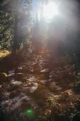 beautiful mountain waterfall in forest under sunlight, Carpathians, Ukraine