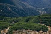 Letecký pohled na krajinu zelené hory, Karpaty, Ukrajina