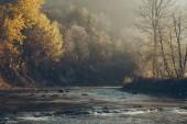 dramatic shot of mountain river and beautiful golden trees, Carpathians, Ukraine