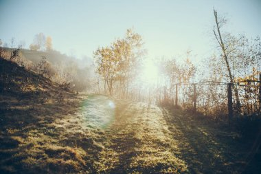 Beautiful foggy landscape with sun flare in Carpathians, Ukraine stock vector