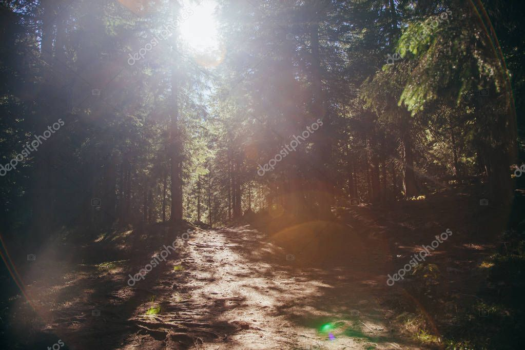 Beautiful mountain pathway in forest under sunlight, Carpathians, Ukraine stock vector