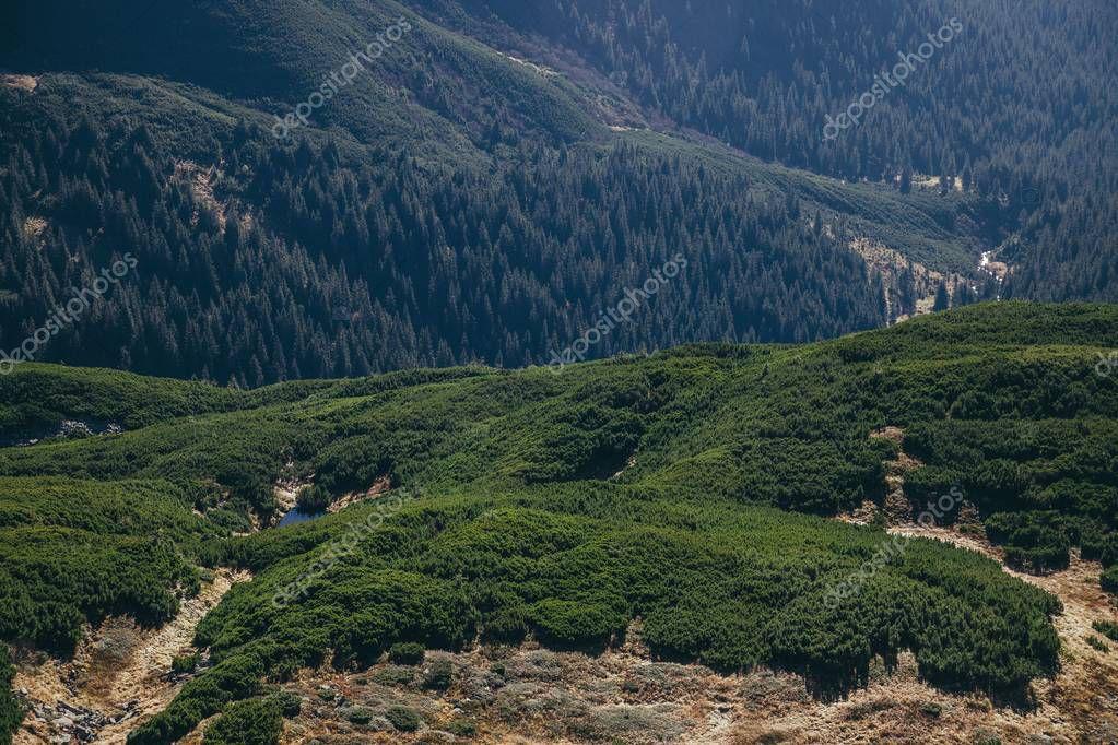 aerial view of green mountains landscape, Carpathians, Ukraine