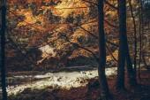 horská řeka v podzimní les, Karpaty, Ukrajina
