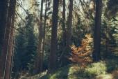 festői kilátással a gyönyörű zöld erdők, a Kárpátok, Ukrajna