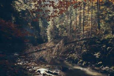 scenic mountain river in autumnal forest, Carpathians, Ukraine