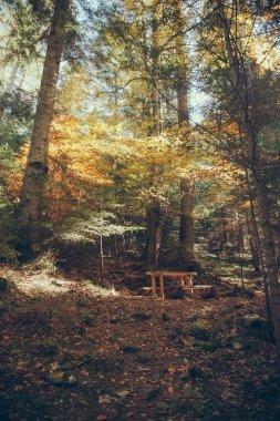 Table in scenic mountain forest in Carpathians, Ukraine stock vector