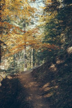 Footpath in beautiful mountain forest in Carpathians, Ukraine stock vector