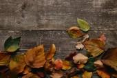 flache Lage mit bunten Laubblättern auf Holzfläche