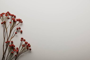 top view of red holly berries on white background
