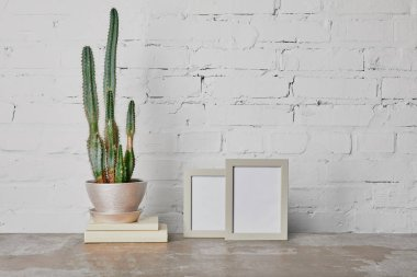 Kaktüs bitki kitap ve beyaz tuğla duvar arka plan üzerinde fotoğraf çerçeveleri