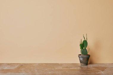 Cactus in flowerpot on dusty table on beige background