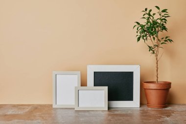 White photo frames and plant in flowepot on beige background