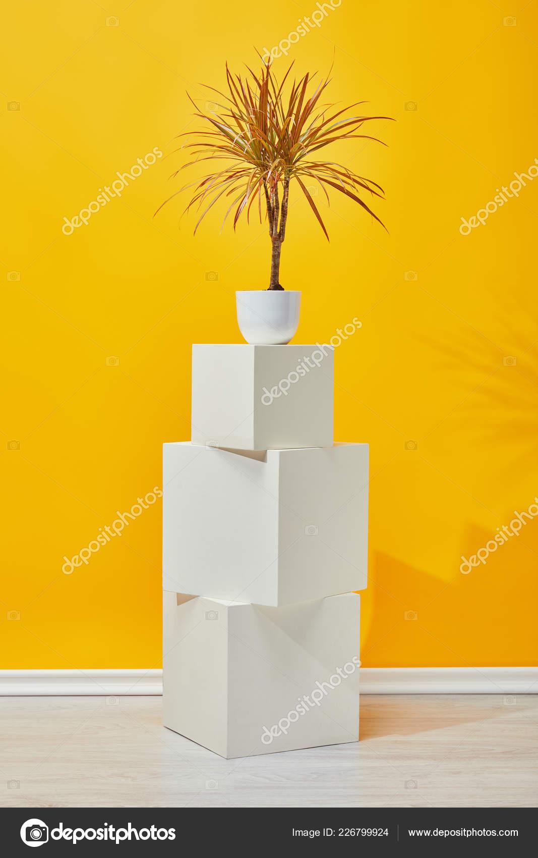 Houseplant Doniczki Kostkę Białego Gipsu Pobliżu ściana