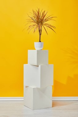 Houseplant in flowerpot on white plaster cubes near yellow wall