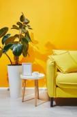 Kanapé, ficus növény és kis asztali képkeret és csésze kávé