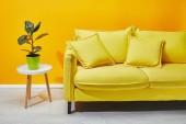 Fotografie Pohovka zelených rostlin na stolku u žluté stěny