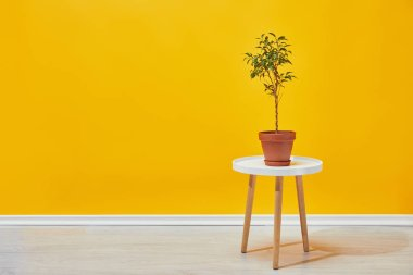 Plant in flowerpot on little wooden table with yellow wall at background stock vector