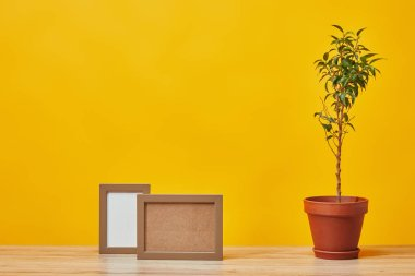 Empty photo frames and plant in pot at wooden table isolated on yellow stock vector