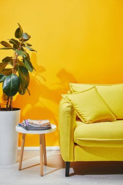 Sofa, plant in pot and coffee table with journals near yellow wall
