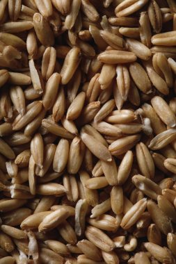 close up of oat groats as textured background with copy space