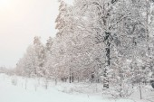 scenic view of snowy trees with side lighting in winter forest