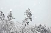 Fotografie malebný pohled na zimní les a rozmazané padající sněhové vločky