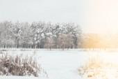 malerischer Blick auf schneebedeckte Bäume mit seitlicher Beleuchtung im Winterwald