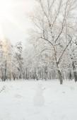 Fotografie malebný pohled na zasněžené stromy a sněhulák v zimě lese