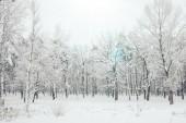 Fotografie malerischer Blick auf schneebedeckte Bäume und Sonnenlicht im Winterwald