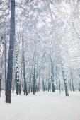 festői kilátással a havas fák a téli erdő