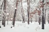 malebný pohled na zimní les a rozmazané padající sněhové vločky
