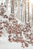 Fotografie Malerische Aussicht auf Eiche im Winterwald und unscharfen fallenden Schneeflocken