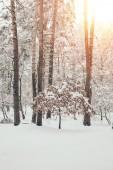 malebný pohled na krásné zasněžené zimní les se slunečním