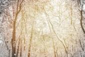 tónovaný obrázek zasněžených zimních lesů jako pozadí