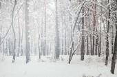 malebný pohled na krásné zasněžené zimní les