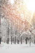festői kilátással a gyönyörű havas téli erdő a napfény