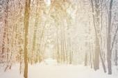 tónovaný obrázek krásné zasněžené zimní les