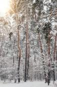 malebný pohled na krásné zasněžené zimní les a slunečního záření