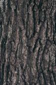 Voller Rahmen mit dunkler Baumbarkenstruktur als Hintergrund