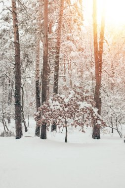Scenic view of beautiful snowy winter forest with sunlight stock vector