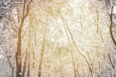 Toned picture of snowy winter woods as background stock vector