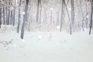Scenic view of winter forest and blurred falling snowflakes stock vector