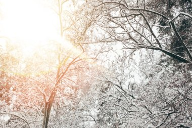 Low angle view of snowy winter forest and sunlight stock vector