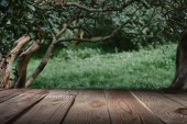 pruhované hnědé dřevěné pozadí na krásný les tapety