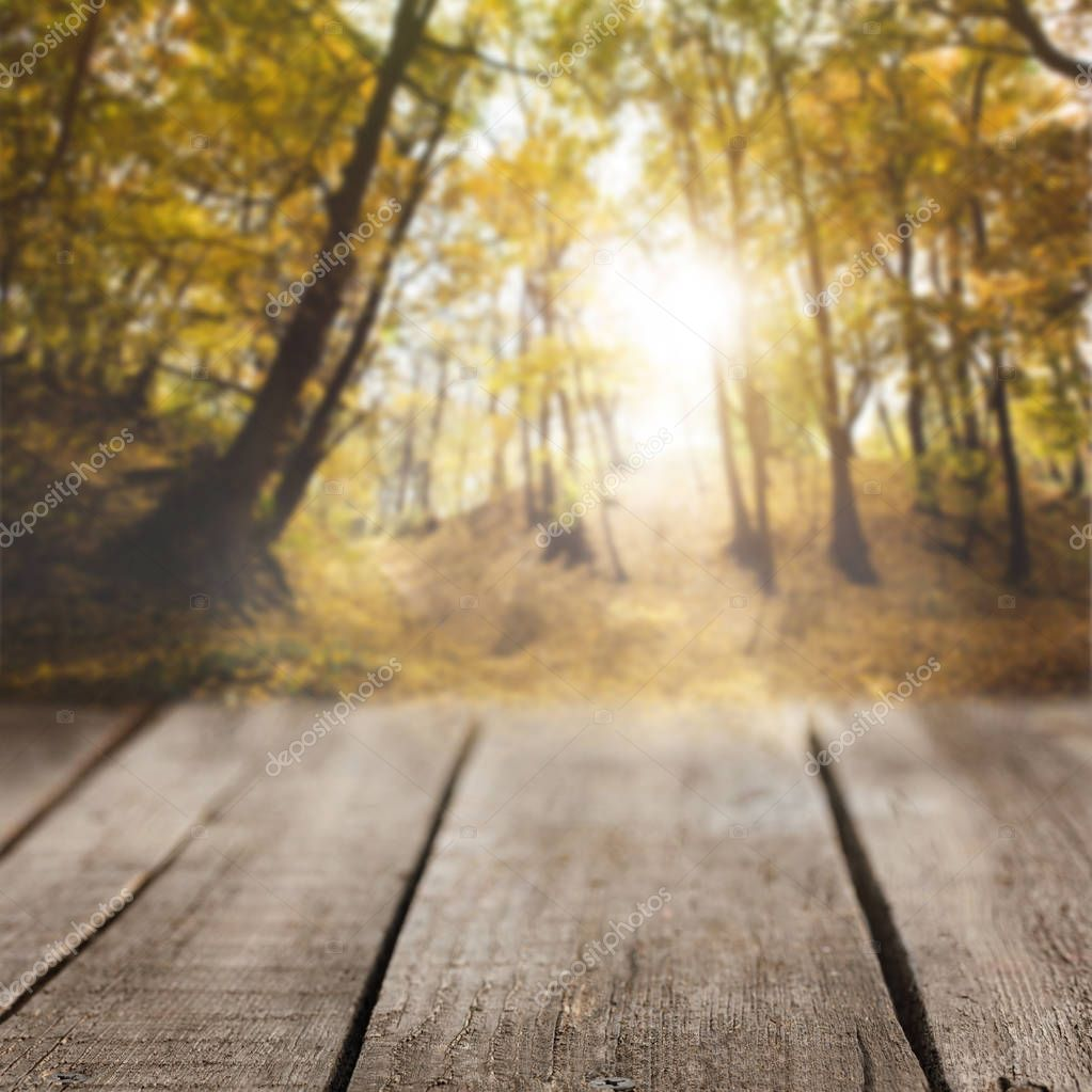 striped wooden background on beautiful autumnal forest wallpaper